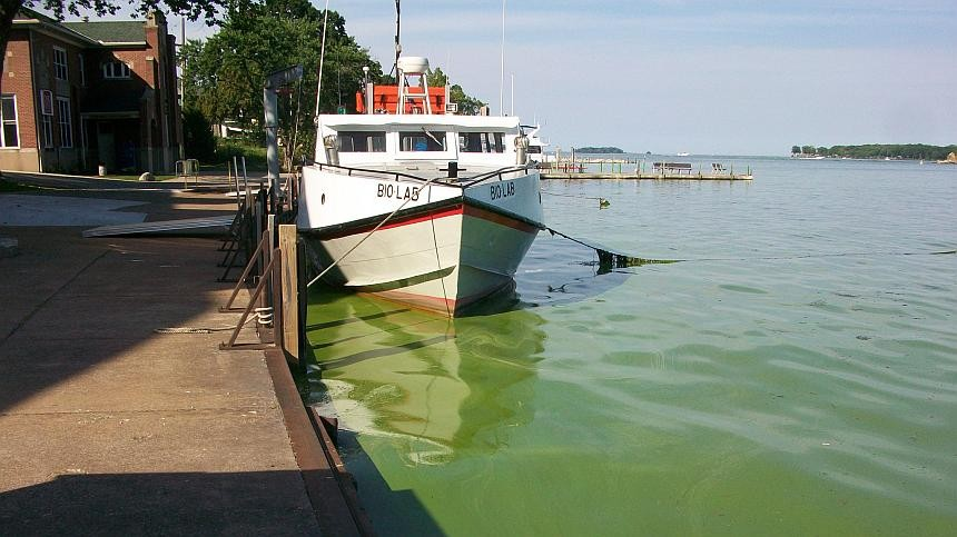 MSU: Early Lake Erie Algal Bloom Projections Positive