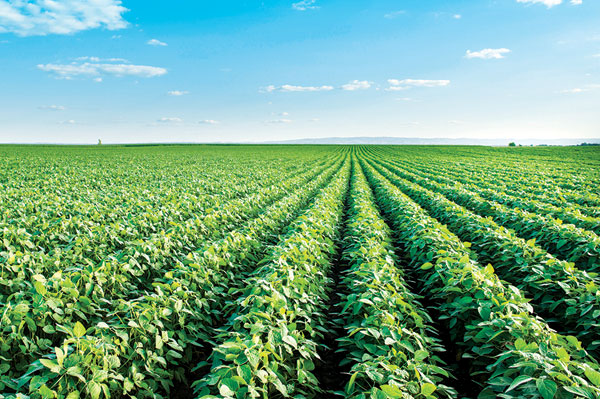 Agri-Mek SC Miticide/Insecticide Now Registered For Soybeans, Sweet Corn