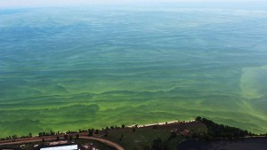 Lake Erie Water Researcher: Everyone Needs To Step It Up