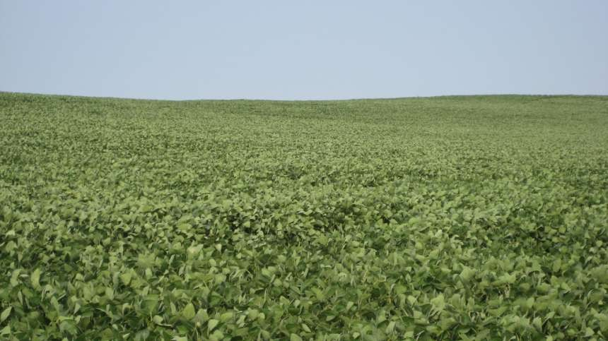 Zeal SC Miticide Now Registered For Soybeans