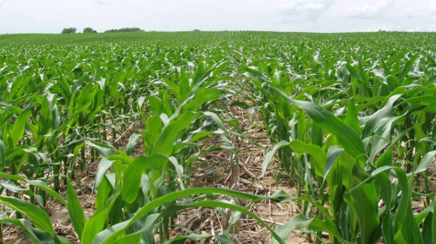 SHIELDEX 400SC Herbicide Now Available to U.S. Corn Growers