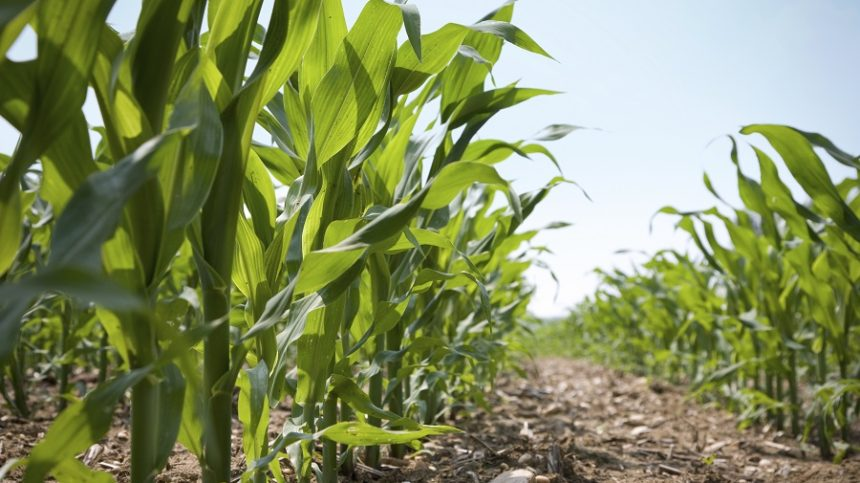 Farming Smarter Hinges on 4R Best Management Practices