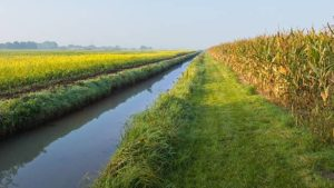 Study: Saturated Buffers Reduce Nitrates From Subsurface Field Drainage Systems