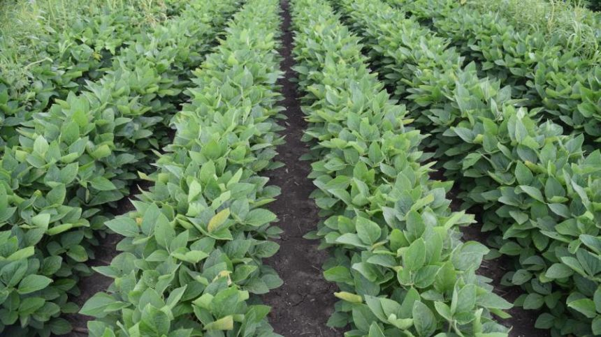 Resistant Weeds Continue To Confound Control Efforts