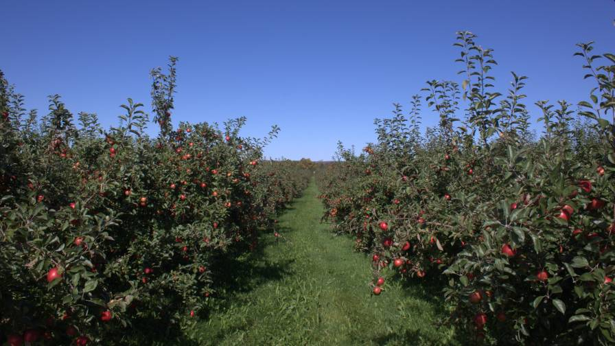 honey crisp apple orchard