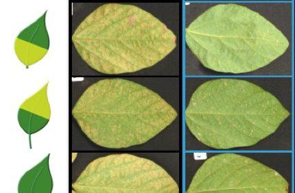 Topguard premix fungicide