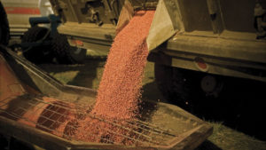 Soybean seed solutions – custom-fit for you.