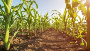 DuPont, Sumitomo Form Global Seed-Applied Technology Agreement