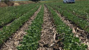 Monsanto's Fraley Addresses Dicamba Situation in Open Letter to Farmers