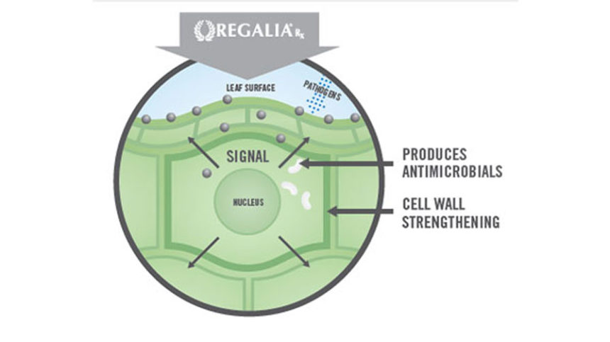 REGALIA<sup>&reg;</sup> Rx biofungicide for broad-acre crops from Koch Agronomic Services