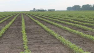 Dow AgroSciences, ADM Collaborate to Bring Enlist E3 Soybeans to U.S. Farmers