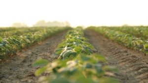 Waterhemp, Palmer Amaranth Among Resistant Weeds Controlled by New FMC Herbicide