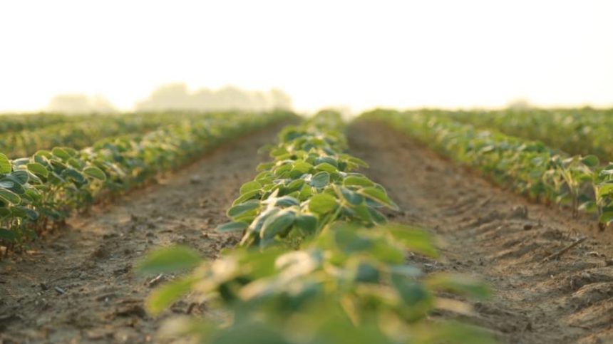 Aqua-Yield Introduces New Herbicide Adjuvant