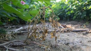 Firsthand Look at Enlist Duo Herbicide Impressing Farmers