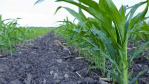 Nutrient Companies Comment on Planting Shifts