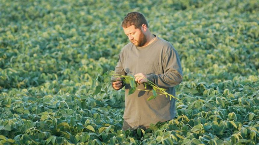 Soybean Association to Study Dicamba Herbicide Complaints