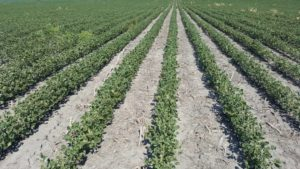Dicamba and the Treadmill of Herbicide Resistance