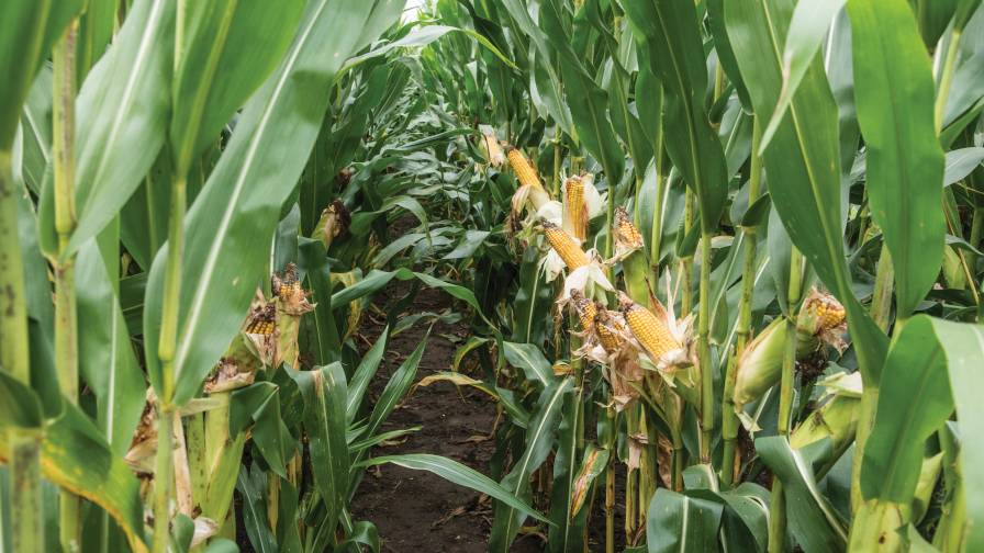insecticides  making the most of limited chemistries