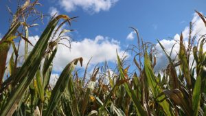 Biopesticides Evolve as Adoption Trends Upward