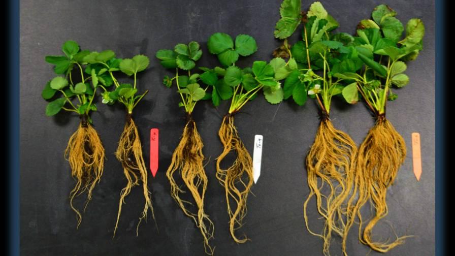 crop-with-Nexia-Simplot