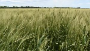 Syngenta Introduces New Fungicide Adepidyn