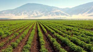 New Publication Addresses Plant Nutrition Diagnostics in Potatoes