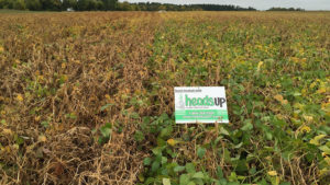 New Seed Treatment: Heads Up<sup>®</sup>  – A Valuable First Step in Managing White Mold